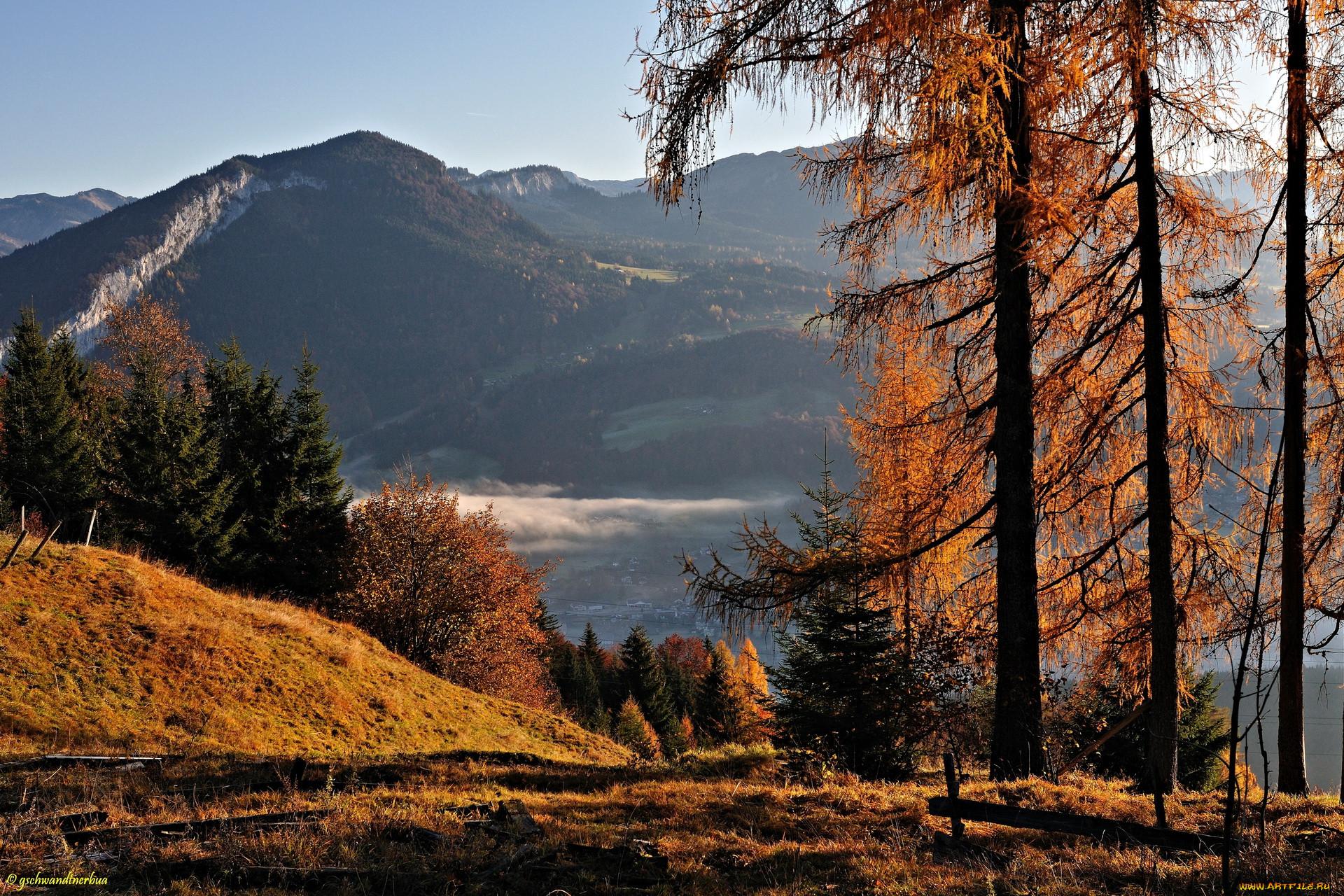 этом фото картинки природа в горах осень темно-зеленые, блестящие
